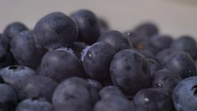 Detail of blueberries. Macro trucking shot. 4K resolution top view. stock video