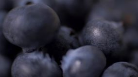 Detail of blueberries. Macro trucking shot. 4K resolution top view. stock footage