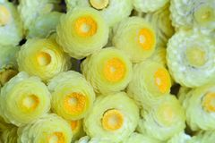 Detail of  bouquet of small yellow flowers full frame Stock Photos