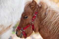 Detail of brawn young horse Stock Photo