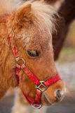 Detail of brawn young horse Stock Photography