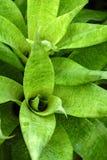 Detail of bromelia stock image