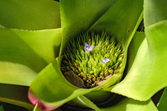 Detail of bromelia stock photography
