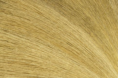 detail broom wood background Royalty Free Stock Image