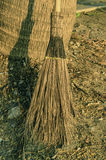 Detail of broom Stock Image