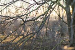 Detail of brown leaves. Close up - detail of brown leaves bare branches Stock Image