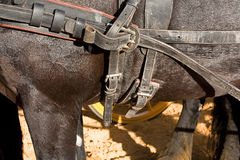 Detail of buckles and straps of a horse used for the transportation of carriages Royalty Free Stock Image