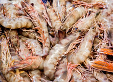 Detail of bunch of king brown prawns in fish market Royalty Free Stock Images