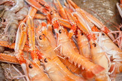 Detail of bunch of red fresh prawns in fish market Royalty Free Stock Photos