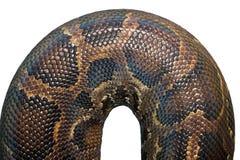 Detail on  burmese python skin Stock Photos