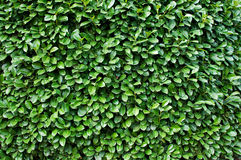 Detail of a bush Stock Photography