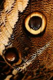 Detail of a butterfly Stock Photos