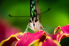 Detail of butterfly resting on red flower Stock Photos