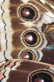 Detail of butterfly wings Royalty Free Stock Image