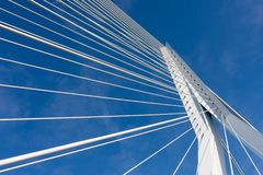 Detail of the cable stayed Erasmus bridge in Rotterdam,  the Net Stock Image