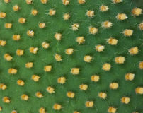 Detail of cactus Stock Photo