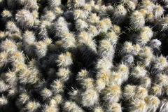 Detail of a cactus in the andean mountains. Of Peru royalty free stock photos