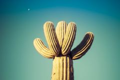 Detail of a Cactus stock photography