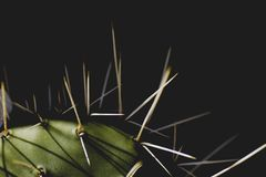 Detail of cactus plant with long and sharp spines. Detail of cactus with sharp spines and black background royalty free stock images