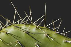 Detail of cactus plant with long and sharp spines. Detail of cactus with sharp spines and black background stock photos