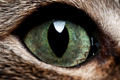 Detail of the cat. A macro that shows a detail of the face of the cat. in particular the green of the iris of the eye Stock Photo