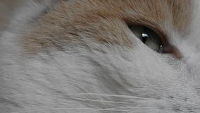 Detail of the Cat Eye. Video with Detail of the Eye of sleepy white and brown Cat stock video footage