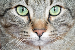 Detail cat eyes Royalty Free Stock Photos
