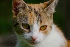 Detail of cat face. In the garden Stock Photography