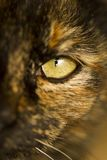 Detail of cat's eye Stock Photography