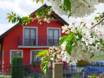 Detail of cherry blossom with a house Stock Photos
