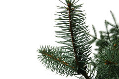 Detail of Christmas tree Stock Photography