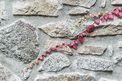 Detail climbing plant Stock Images