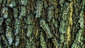 Detail closeup of bark of a tree. stock image