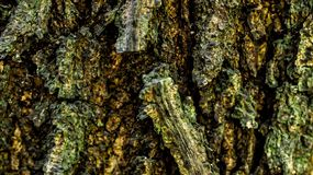Detail closeup of bark of a tree. stock images