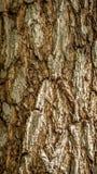 Detail closeup of bark of a tree. stock photos