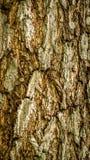 Detail closeup of bark of a tree. stock photo
