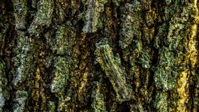 Detail closeup of bark of a tree. royalty free stock image
