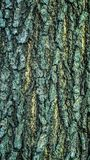 Detail closeup of bark of a tree. royalty free stock images