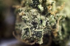 Detail closeup view of medical marihuana bud. Closeup view of medical marihuana bud Stock Photo