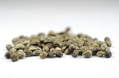 Detail closeup view of medical marihuana seeds. Closeup view of medical marihuana seeds Stock Photography