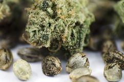 Detail closeup view of medical marihuana seeds and bud. Closeup view of medical marihuana seeds and bud Royalty Free Stock Photo