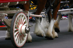 Detail, Clydesdale horses pulling wagon Stock Image