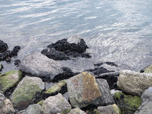 Detail of coastline with rock and mussels Stock Images