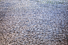 Detail of cobblestone path Royalty Free Stock Images