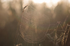 Detail on a Cobweb Early Morning in Autumn Royalty Free Stock Photo