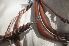Detail of the collar of horse harness stock images
