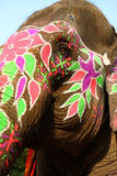 Detail of colored elephant head. India Stock Photography