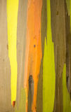 Detail of colorful bark of Rainbow Eucalyptus tree Royalty Free Stock Image