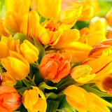 Detail of colorful tulip flowers spring Stock Image