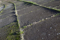 The detail, composition with lines and concrete attitude and nature, grass Royalty Free Stock Image